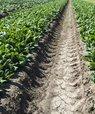 Priming af frø inden såning forøger spireevne og -hastighed, men primer man spinatfrø med zink, vil det også sikre mere modstandsdygtige implanter selv under lave temperaturer og i næringsfattige forhold.